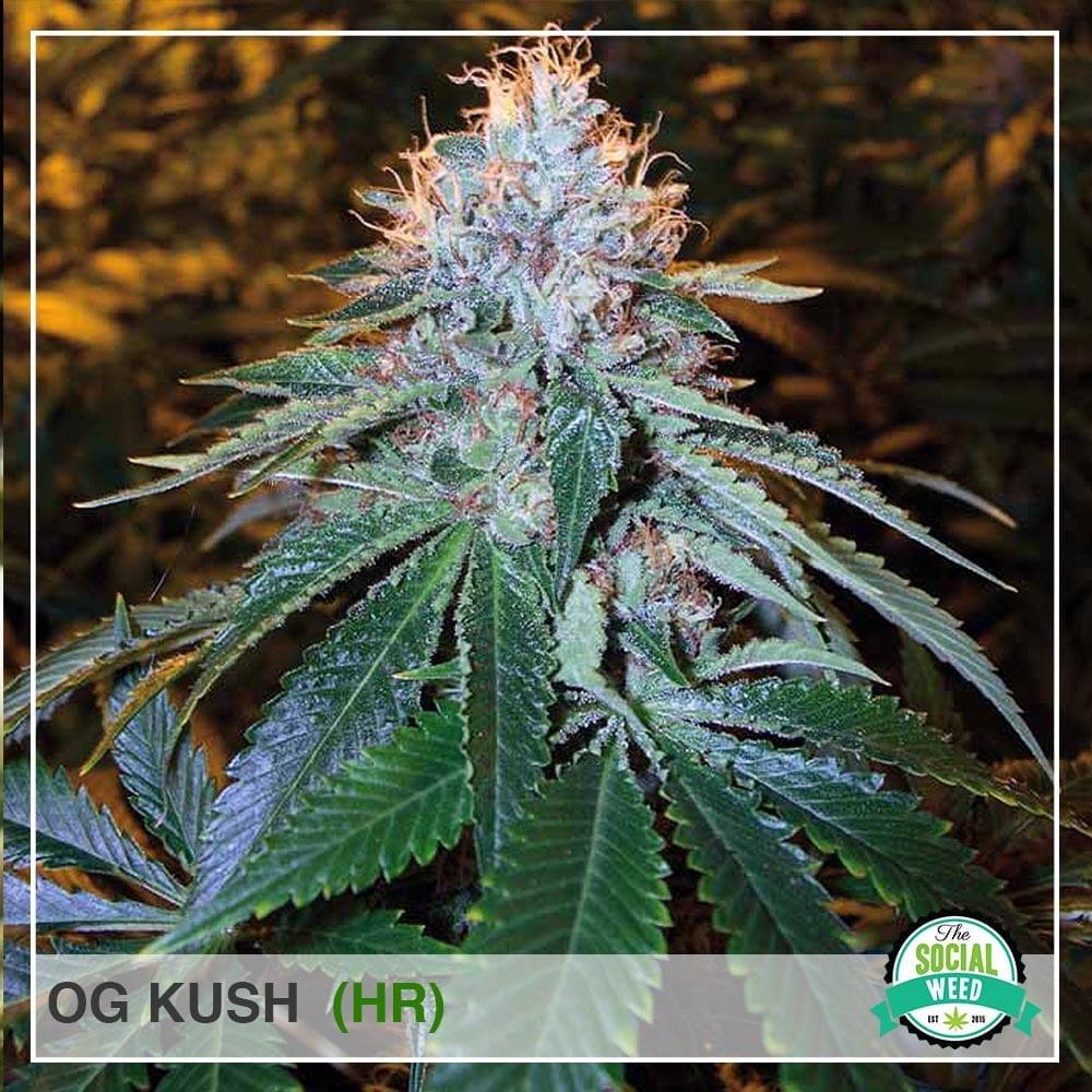 The Social Weed, Cannabis Recipes, Cannabis Strains, Cannabis Dispensary Locator, Cannabis News