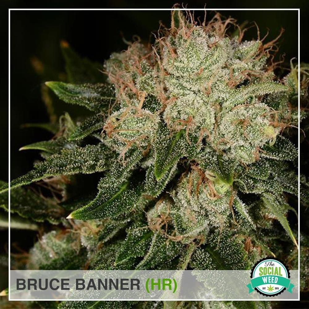 Bruce banner HR