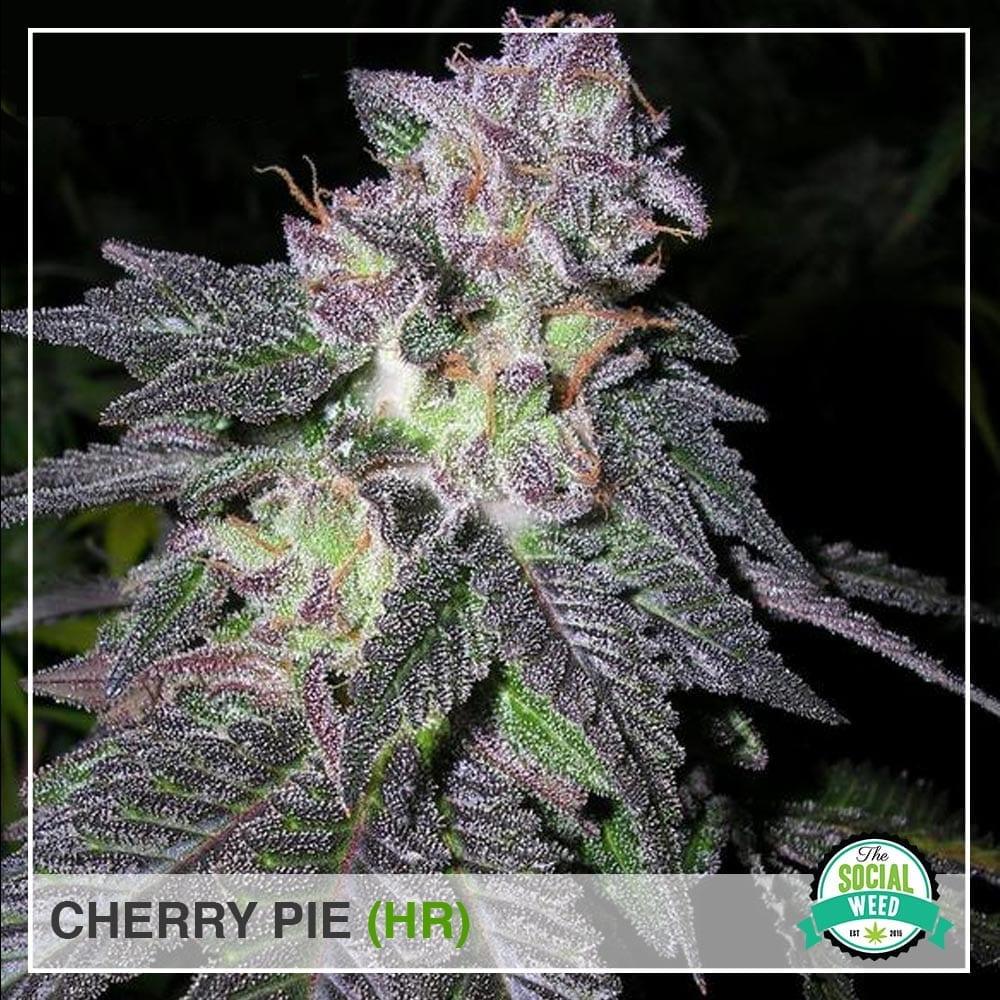 Cherry pie strain HR