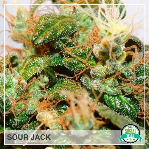 Sour Jack
