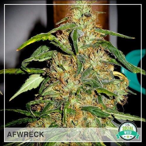 Afwreck