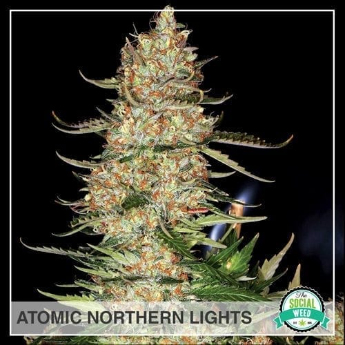 Atomic Northern Lights