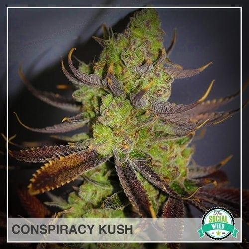 Conspiracy Kush
