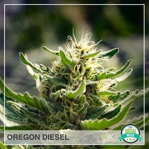 Oregon Diesel