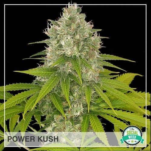 Power Kush