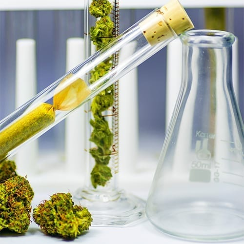 Study reveals 21 new cannabanoids