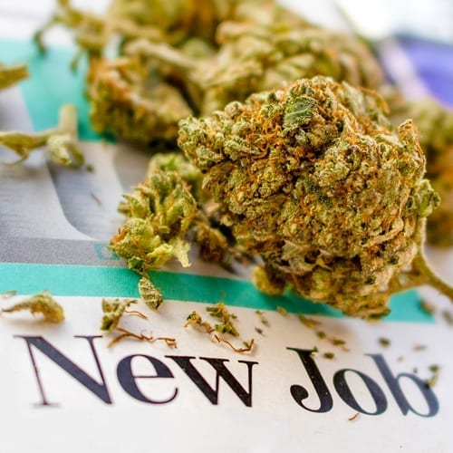 New Cannabis Jobs