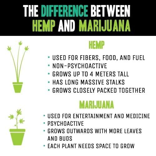 Hemp vs mmj infographic